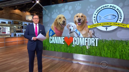 CBS news sharing story of canine comfort dogs