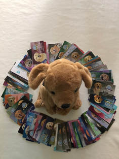 comfort dog trading cards and plush dog