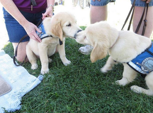 Lcc K 9 Comfort Dog Ministry Is Recruiting Volunteer Apprentice Trainers